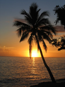 Sunset_with_coconut_palm_tree,_Fiji