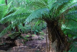 800px-Rainforest_-_Liffey_Falls_2008_-_a
